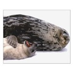 Seal mother and pup - Antarctica Small Poster