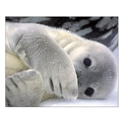 Seal Pup Antarctica Small Poster