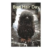 Bad Hair Day Postcards (Package of 8)