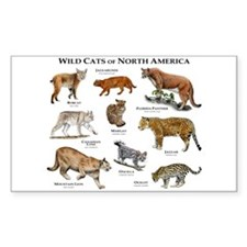 Wildcats of North America Decal
