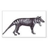 Thylacine Decal
