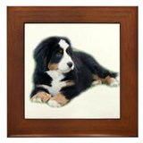 bernese-mountain-puppy_ Framed Tile