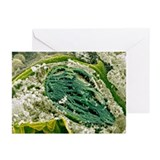Chloroplast, SEM - Greeting Cards (Pk of 20)