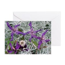 Clematis 'Petite Falcon' - Greeting Cards (Pk of 2