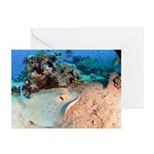 Blue-spotted stingray - Greeting Cards (Pk of 20)