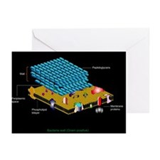 Gram positive cell wall, artwork - Greeting Cards