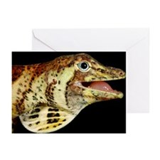 Head of a banded tree anole - Greeting Cards (Pk o