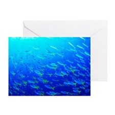 Robust fusilier fish - Greeting Cards (Pk of 20)