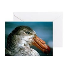 Southern giant petrel - Greeting Cards (Pk of 20)