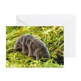 Tardigrade, SEM - Greeting Cards (Pk of 20)