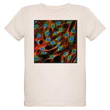 Fibroblast cells - T-Shirt