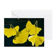 Maidenhair Tree (Ginkgo biloba) - Greeting Card
