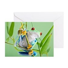 Red-eyed tree frog - Greeting Card