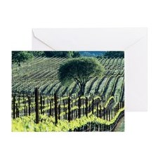Vineyard - Greeting Card