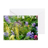 Hummingbird Greeting Cards (10 Pack)