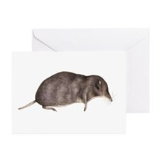 Common shrew, artwork - Greeting Cards (Pk of 10)