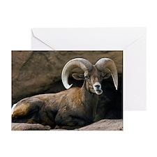 Male Desert Bighorn Sheep - Greeting Cards (Pk of