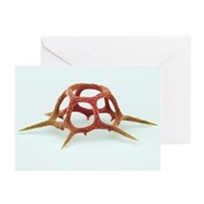 Silicoflagellate, SEM - Greeting Cards (Pk of 10)