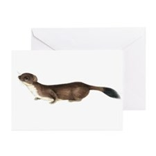 Stoat, artwork - Greeting Cards (Pk of 10)