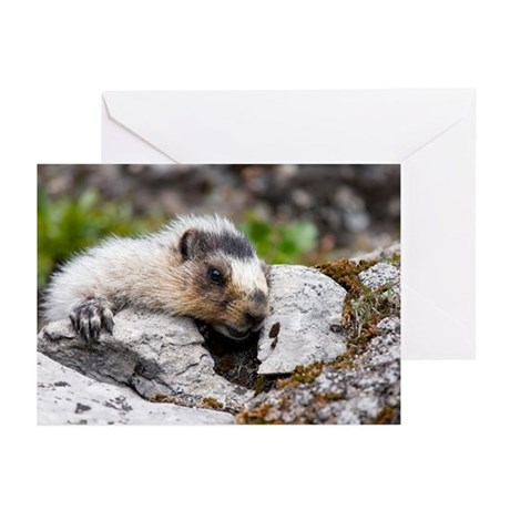 Hoary marmots - Greeting Cards (Pk of 10)