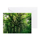 Temperate rainforest - Greeting Cards (Pk of 10)