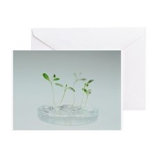 Plant biotechnology - Greeting Cards (Pk of 10)