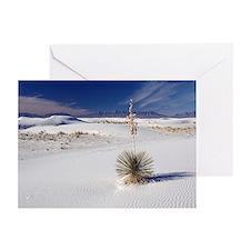 Soaptree yucca (Yucca elata) - Greeting Cards (Pk