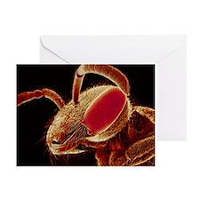 Bee head, SEM - Greeting Cards (Pk of 10)