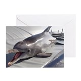 Dolphin training - Greeting Cards (Pk of 10)