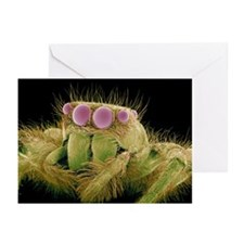 Jumping spider, SEM - Greeting Cards (Pk of 10)