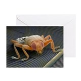Parasitic fly, SEM - Greeting Cards (Pk of 10)