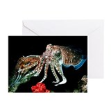 Pharaoh cuttlefish - Greeting Cards (Pk of 10)