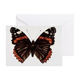 Red admiral butterfly - Greeting Cards (Pk of 10)
