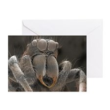 SEM of spider - Greeting Cards (Pk of 10)