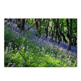 Bluebell wood - Postcards (Pk of 8)