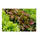 Lettuce - Postcards (Pk of 8)