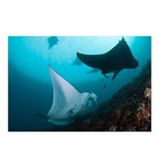 Manta rays - Postcards (Pk of 8)