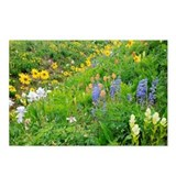 Summer mountain flowers - Postcards (Pk of 8)