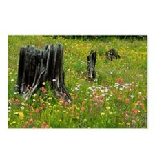 Wildflower meadow - Postcards (Pk of 8)
