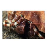 Hermit crab - Postcards (Pk of 8)