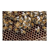 Queen bee with worker bees - Postcards (Pk of 8)
