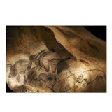 Stone-age cave paintings, Chauvet, France - Postca