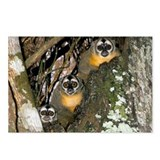 Three-striped owl monkeys - Postcards (Pk of 8)