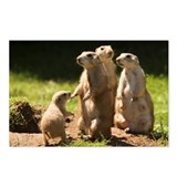 Black-tailed prairie dogs - Postcards (Pk of 8)