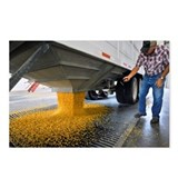 Corn at an ethanol processing plant - Postcards (P