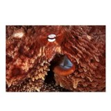 Giant Pacific octopus - Postcards (Pk of 8)