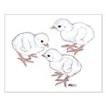 Guineas White Keets Small Poster