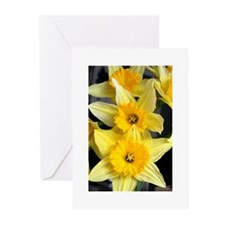 Daffs in a line.jpg Greeting Cards (Pk of 10)