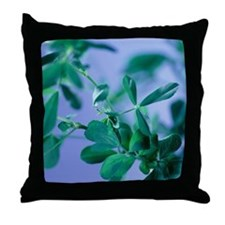 Alfalfa (Medicago sativa) - Throw Pillow