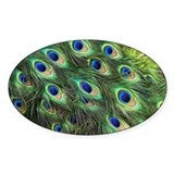 Peacock feathers - Decal